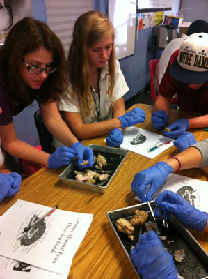 University of Texas Arlington_dissections_slide